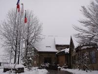 雪の中で咲くスイセン