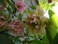 春を告げる花々
