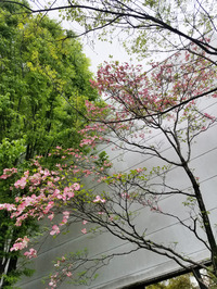 花々の季節到来