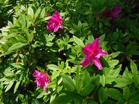 オリガーデンの花々