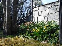 春の花々が次々と開花