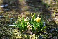 大里研究所に訪れた小さな春