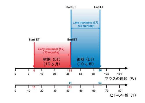 テロメア_マウスとヒトの年齢換算表.jpg