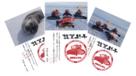 南極 昭和基地からの年賀状